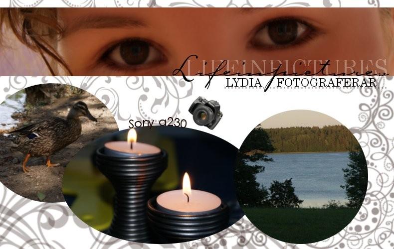 lifeinpictures